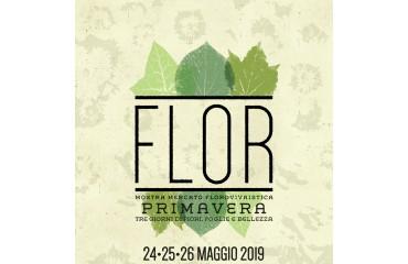 Flor Primavera 2019